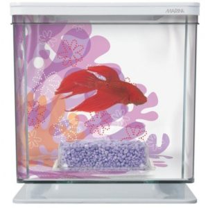 marina-betta-kit-flower